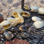 BC clams on grill 9x6