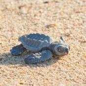 BWE one turtle 9x6