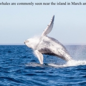 ES humpback whale breach 2