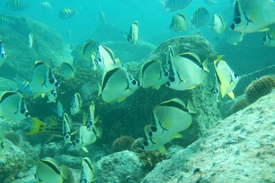 Island Kayaking & Marine Wildlife (8 days)