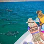 ES:BWE kids looking at dolphins 9x6