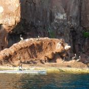 ES single kayak pelicans on rocks 9x6