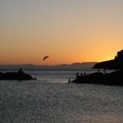 ES:IH Pelicans sunset 9x6