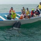MB calf next to boat