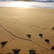 BWE turtles on beach 9x6