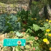 FSS seed garden