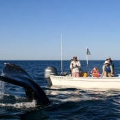 MB whale tail and boat 9x6
