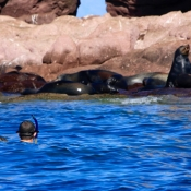 ES snorkelers, sea lions on rocks 9x6