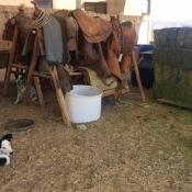 FSS dog and horse tack