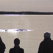 MB whale in front of camp 9x6