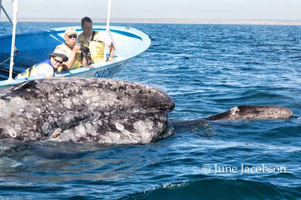 2015SH_whale watch Mag Bay 600x400