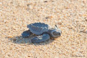 bwe-one-turtle-9x6