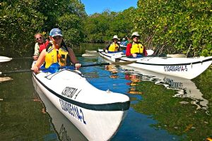 dt-double-kayaks-mangroves-9x6