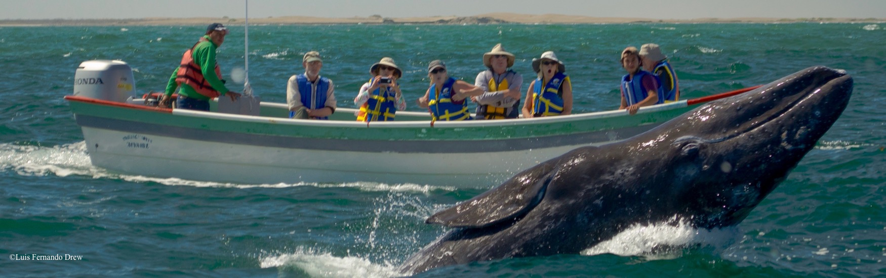 Whale Watching Quick Getaway (3 nights)