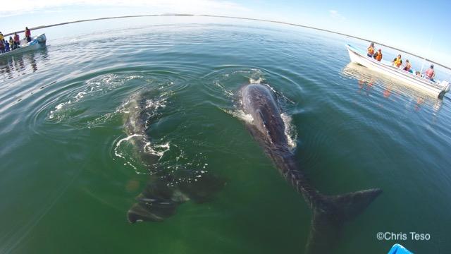 Whales & Desert Trails (7 days)